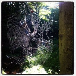 Web.broken