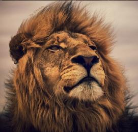 Lion.Aslan