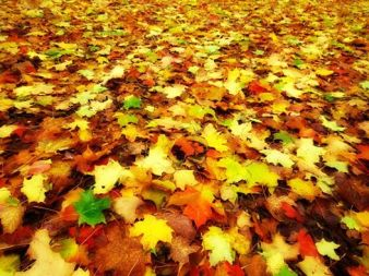Autumn Carpet.JD